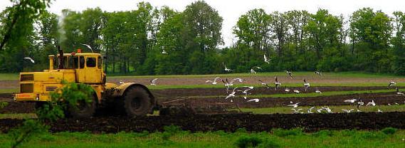 traktorlogo