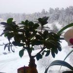 А за вікном майже… зима )))